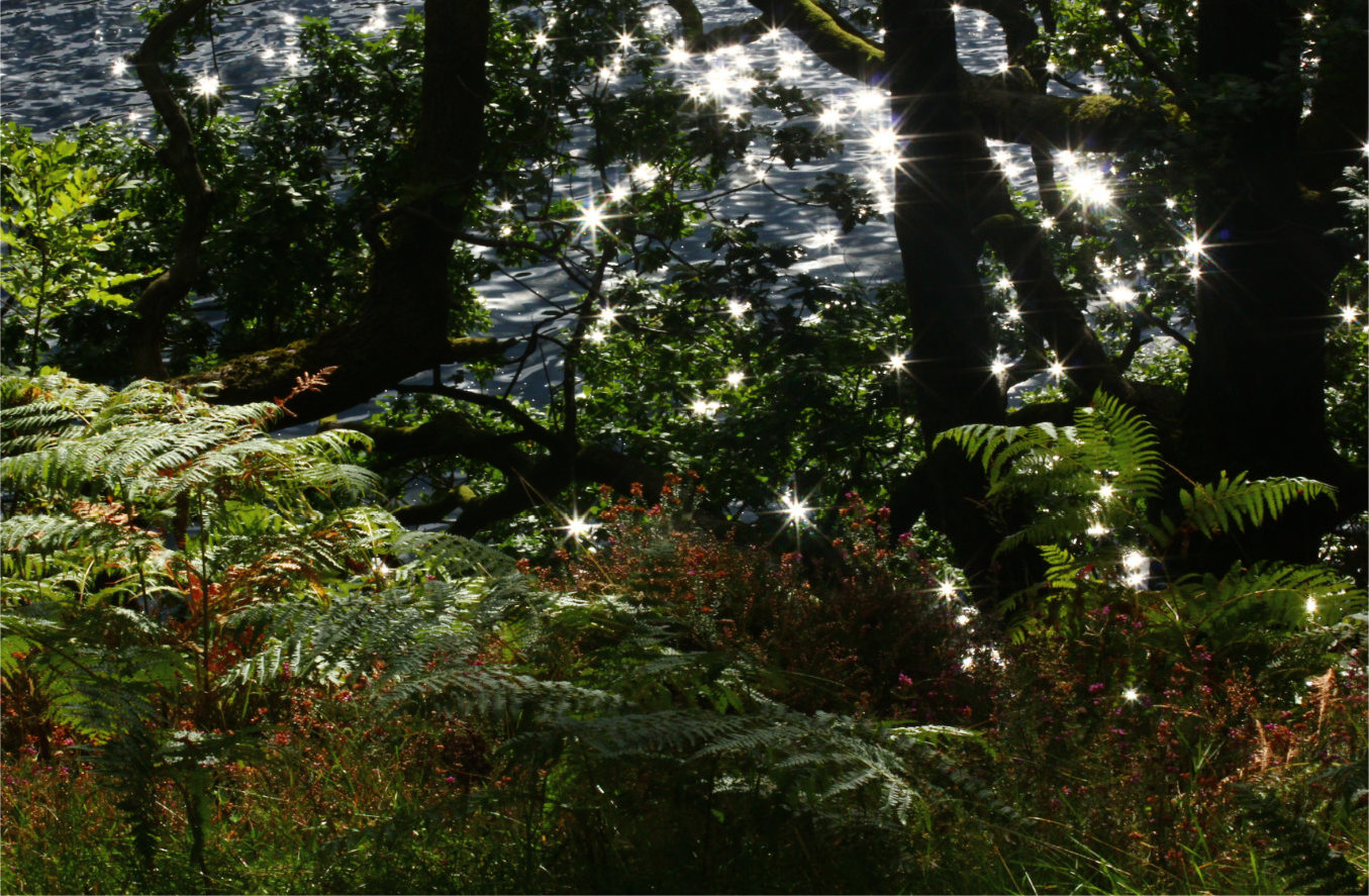 Water sparkling in the sunlight on a lake photographed through trees with ferns in the foreground