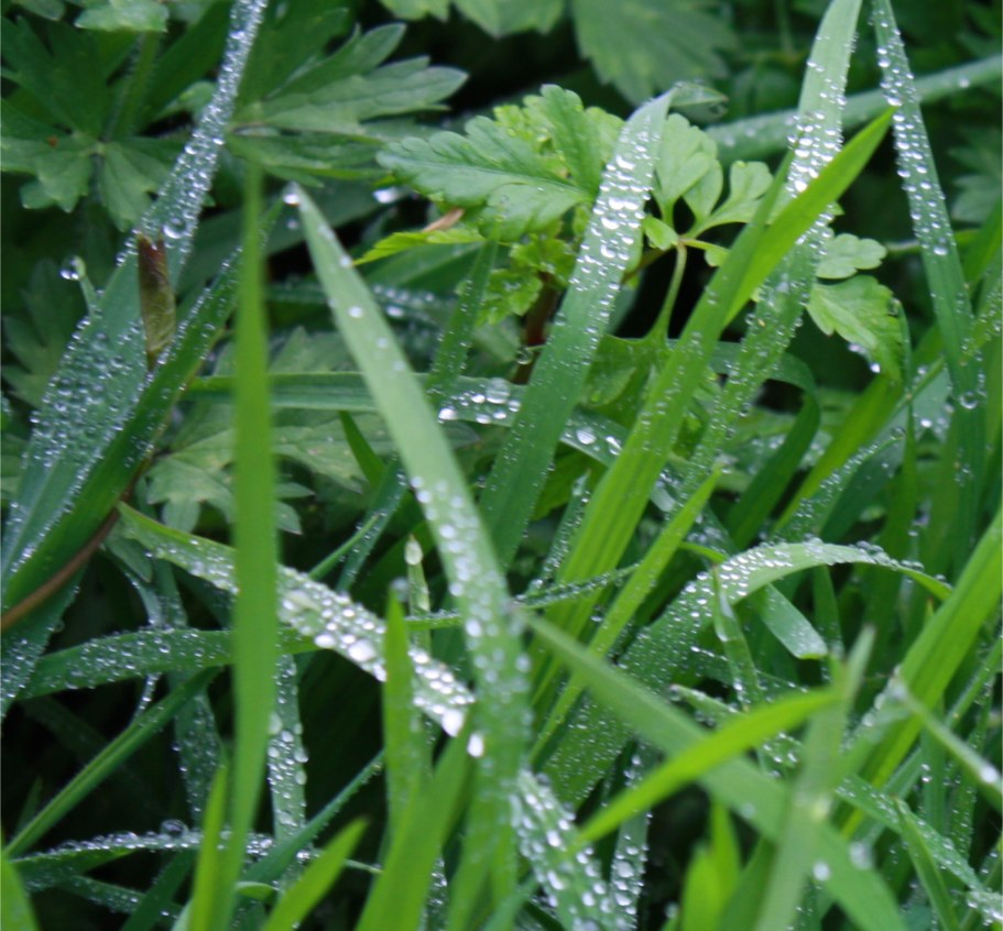Dew on grass and weeds that looks like thousands of tiny diamonds