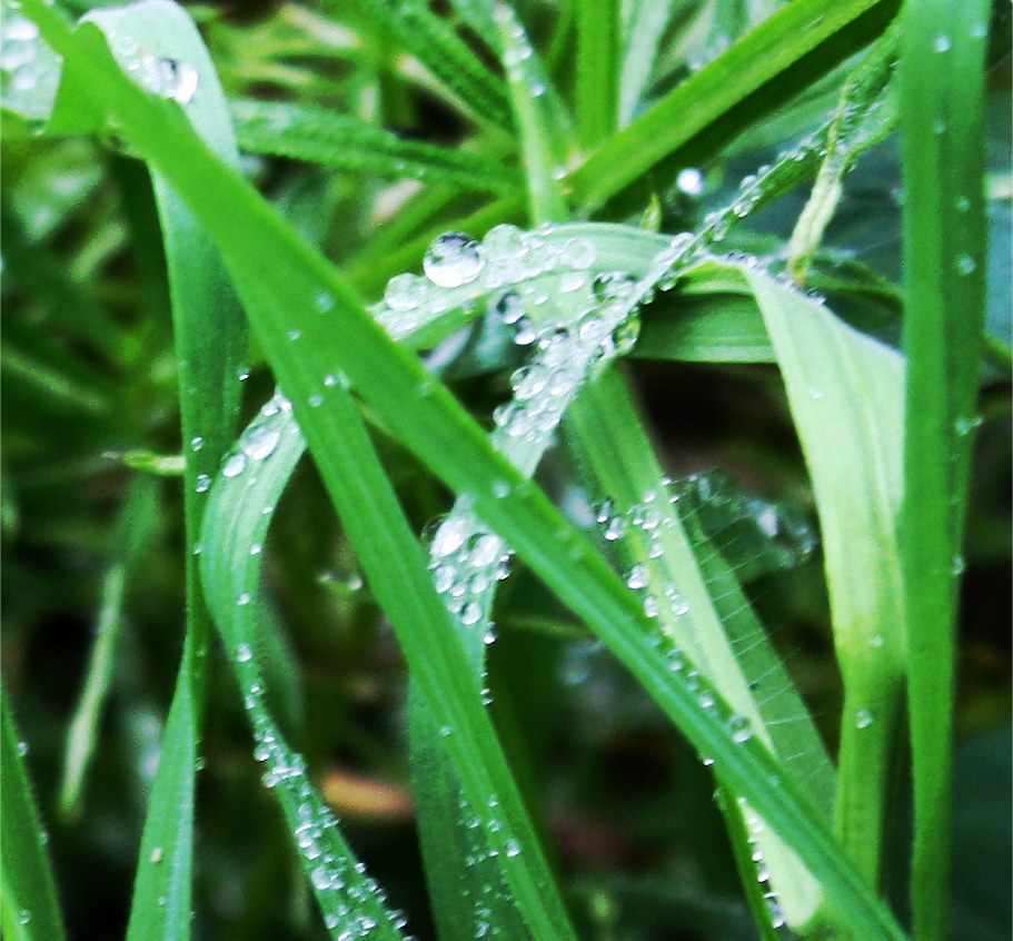 Green grass and water drops