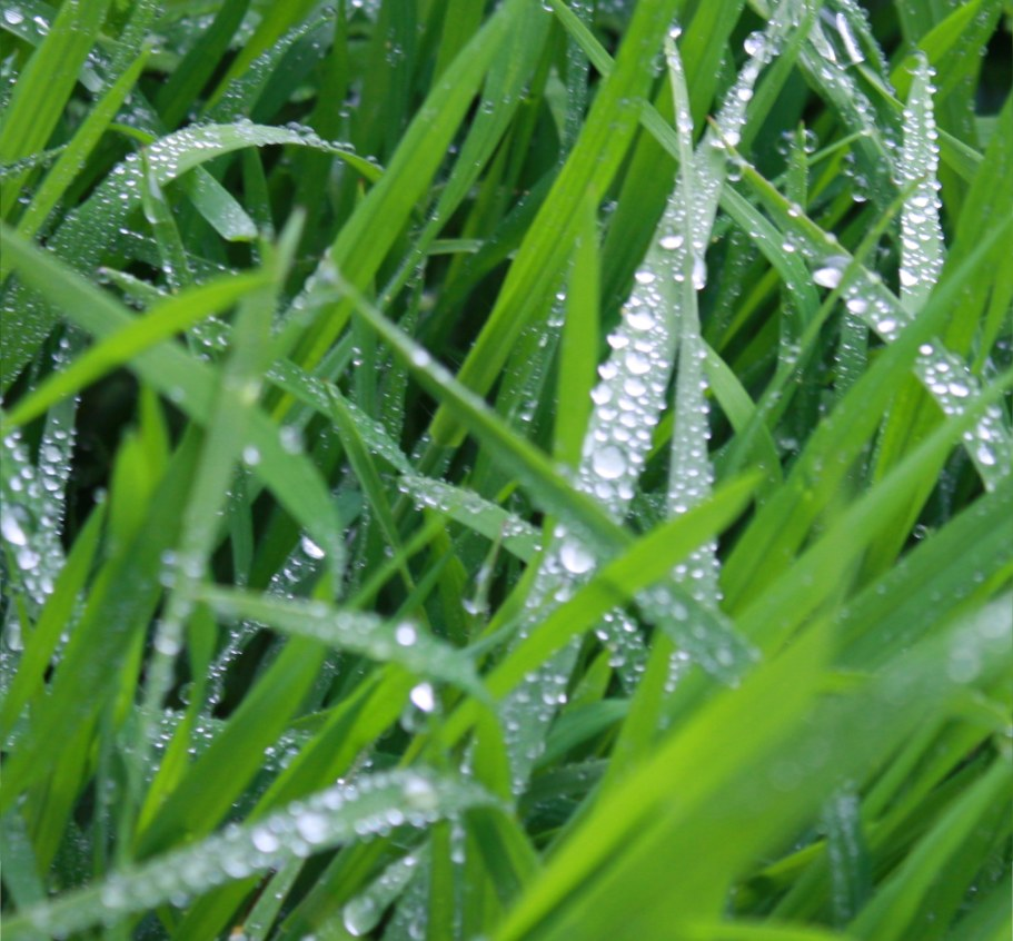 Young spring grass with water drops that look like diamonds