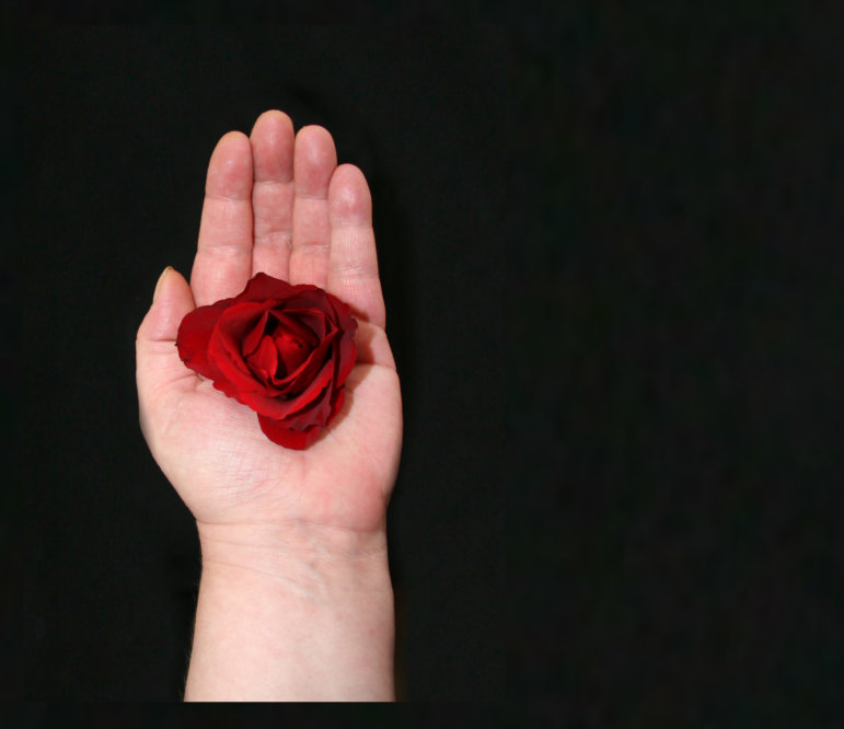 Red Rose In The Hand Facebook Blank