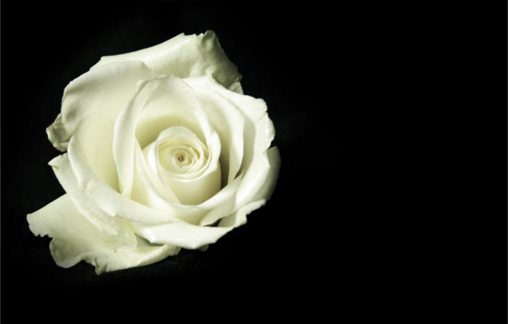 White Rose On Black Facebook Blank