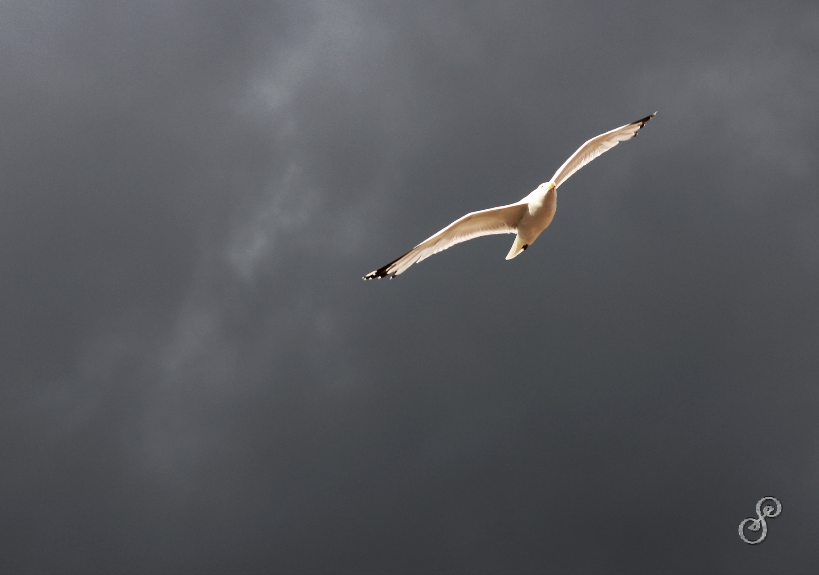 Stormy dark sky with a sunlight seagull